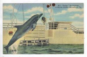 Pudgy  the Porpoise, at Marine Studios,Marineland,FL,30- 40s