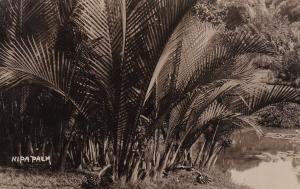 RP Nipa Palm, Singapore, 00-10s