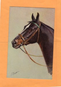 Brown Thoroughbred Horse Portrait, Head Study Postcard, Signed by Artist I Rivst