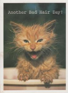 Kitten In A Bath Washing Fur Another Bad Hair Day Cat Postcard