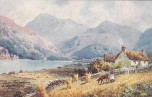AS, Ben Cruachan & Loch Etive From Taynuilt, Scotland, UK, PU-1915