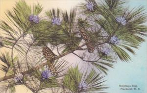 North Carolina Southern Pines Greetings With Long Leaf Pine In Blossoms Handc...