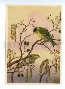 127840 Eurasian Siskin HUNT Vintage Colorful Russian PC