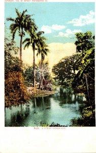 Cuba A Cuban Landscape Detroit Publishing