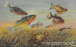 Marine Life as seen through Port Holes of Photo Sub Rainbow Springs, Florida
