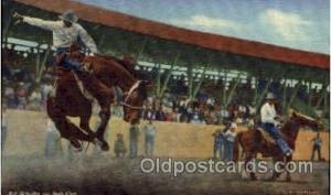 Ed Scholtz on Bob Cat Western Cowboy Cowgirl Postcard Postcards  Ed Scholtz