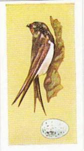 Sweetule Vintage Cigarette Card Birds & Their Eggs 1954 No 20 Swallow