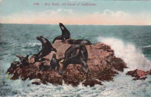 California San Francisco Seal Rocks 1911