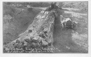 QUEEN OF THE FOREST Petrified Forest, Calistoga, CA Car c1910s Vintage Postcard