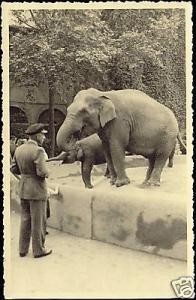 Elephants in Zoo, Zoological Garden (1930s) RPPC
