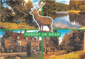 uk46261 forest of dean uk