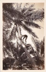 Hawaii Climbing For Coconuts Real Photo