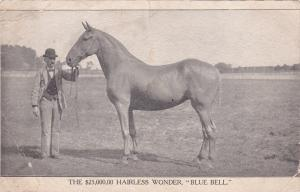 The $25,000.00 Hairless Horse Wonder, Blue Bell , 00-10s
