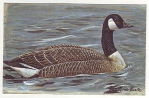 P452 JLs vintage canada goose artist signed