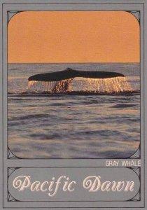 Pacific Ocean Gray Whale