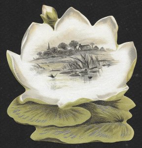 VICTORIAN TRADE CARD Hoods Sarsaparilla Die Cut Lilly Pad