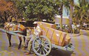 Bahamas Nassau Two Wheel Delivery Cart