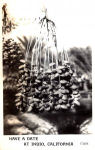California Indio Cluster Of Dates 1949 Real Photo