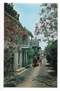 St Augustine FL Aviles Street Horse Drawn Carriage Vintage Florida Postcard