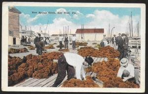 Men on Wharf with New Sponge Catch Key West Florida Unused c1920s