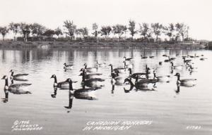 RP: Canadian Honkers in Michigan , 30-40s