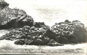 RPPC Seal Herd near the Cliff House Restaurant - San Francisco CA, California