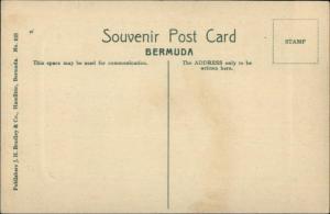 Bermuda Devils Hole JH Bradley Co #103 c1910 Postcard