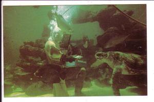 Rectangular Oceanarium, Marineland Florida