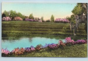Postcard SC Charleston Middleton Place Gardens The Terraces Hand Colored O06