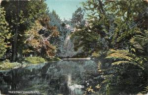Crown Point New York~Putts Creek~c1910 Robson & Adee Postcard