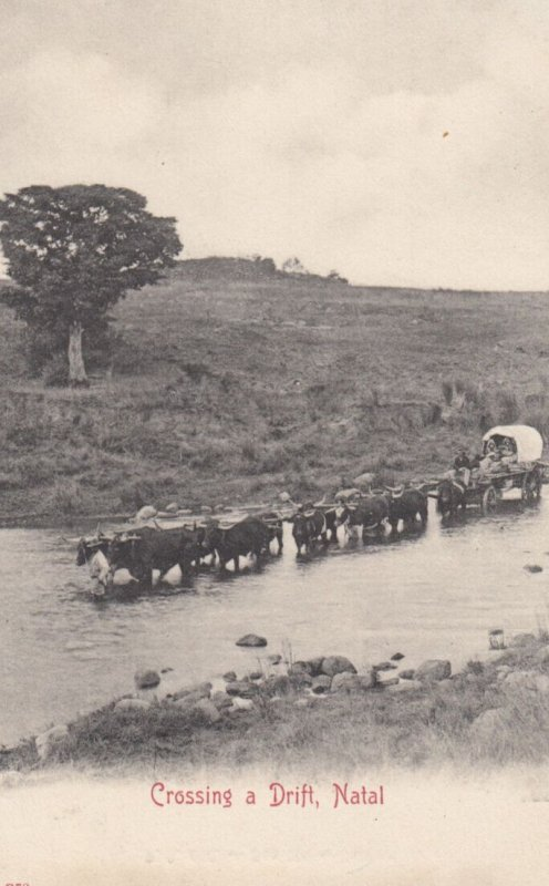 Crossing a drift , NATAL , Africa , 00-10s