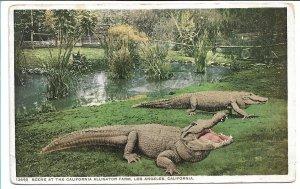 Los Angeles, CA - California Alligator Farm - Early 1900s