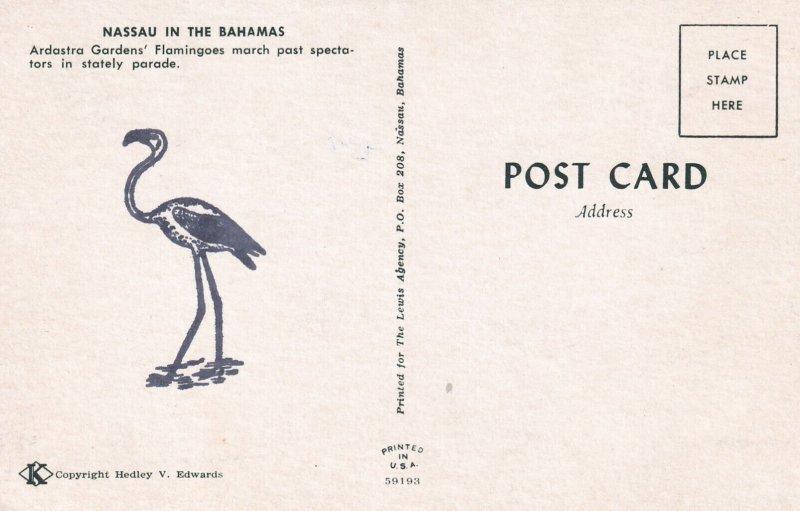 NASSAU, Bahamas, 1940s-Present; Ardastra Garden's Flamingoes