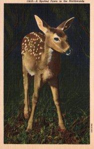 Fawn Deer in the Northwoods