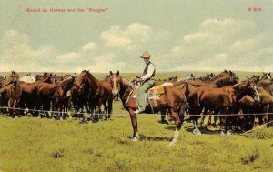 Round Up Horses & the Rangler Cowboy & Horses Western c1910s Vintage Postcard
