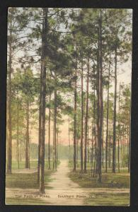 Path View The Path of Pines Sountern Pines North Carolina Unused c1930s