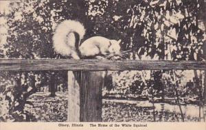 Illinois Olney The Home Of The White Squarrel