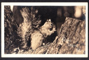 ME - Poland Springs Pets – real photo - squirrel