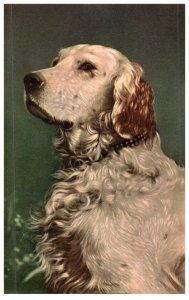 Dog  artist signed ALfred Mainzer