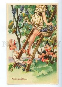 149489 COMIC PIN-UP BELLE on Tree w/ GRAPES vintage PC