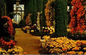 Pennsylvania Kennett Square Longwood Gardens Main Conservatory Chrysanthemum ...