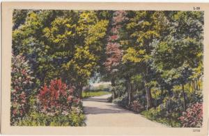 USA, Road and Trees, in the Woods, unused Postcard