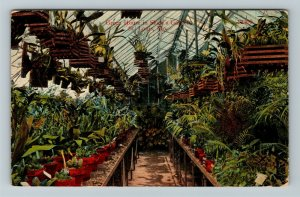 St Louis MO-Missouri, Green House In Shaw's Garden, Vintage c1915 Postcard
