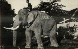 Singapore or Malaysia Elephant & Native Man c1915 Real Photo Postcard