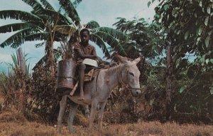 JAMAICA, 1950-1960s; Water Bay, Boy On A Donkey