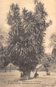 Congo Belge Postcard Mapolenge big tree ,natives