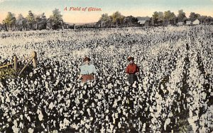 Farming Post Card Field of Cotton Writing on back