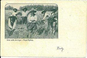 02382 ETHNIC vintage postcard: PORTUGAL - AZORES Açores