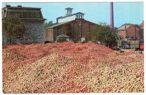 Martinsburg, West Virginia, A Million Bushels of Apples