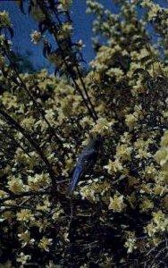 State Flower and Bird - Misc, Idaho ID